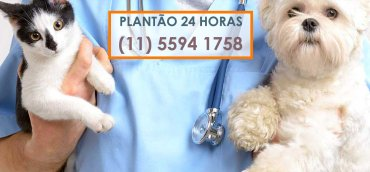 clinica veterinaria 24 horas